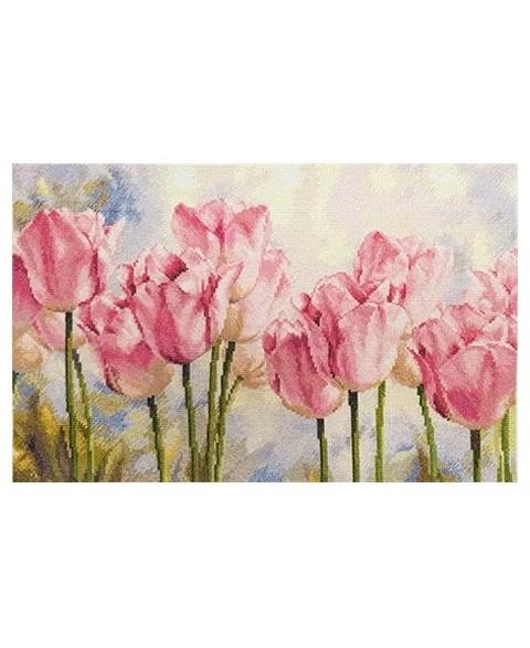 Tulips S2-37