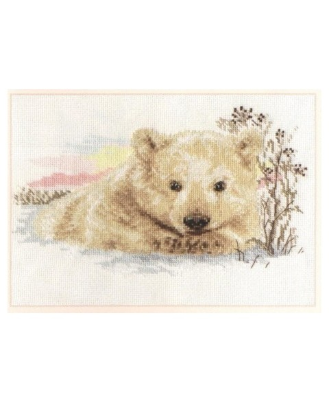 Northern Bear Cub S1-19